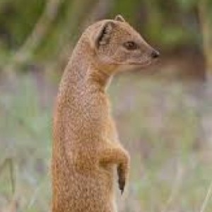 Mongoose8
