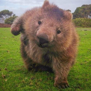 Mortal_Wombat